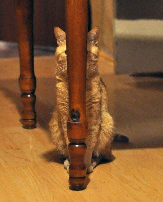 stealthy-ninja-cats-18