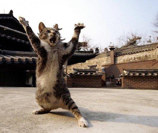via: pets welcome.com