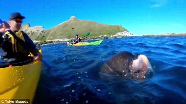 slaps kayaker with octopus에 대한 이미지 검색결과