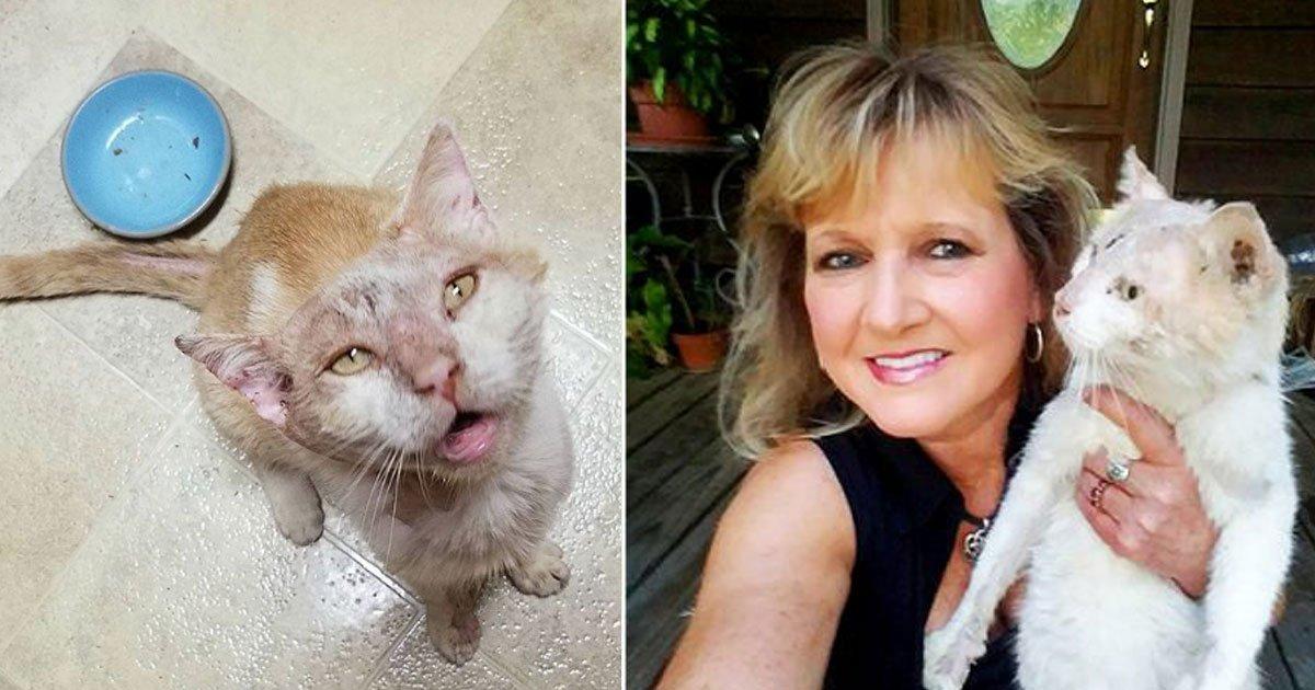 abused cat.jpg?resize=1200,630 - Une femme a trouvé un chat dans un triste état et il est maintenant méconnaissable