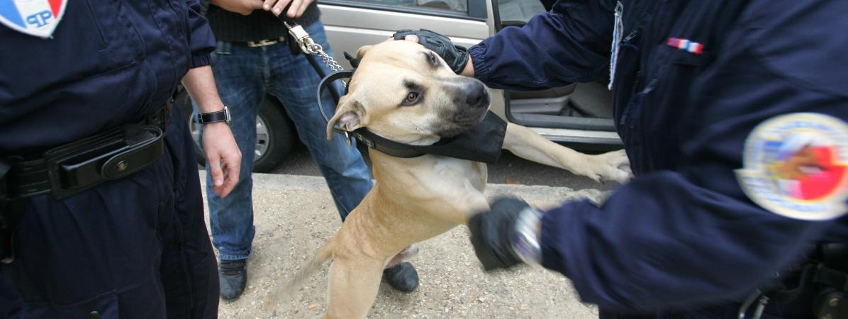 american st.jpg?resize=412,232 - Des policiers municipaux abattent un chien perdu, soi-disant dangereux.