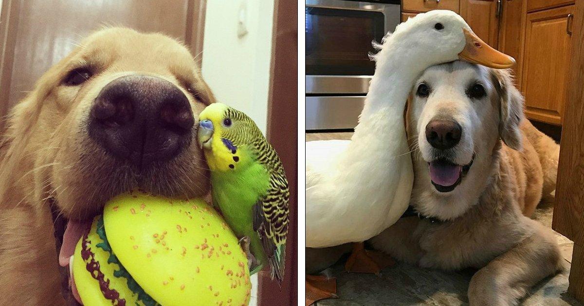 animais amigos.jpg?resize=412,275 - 16 Fotos comprovam que os animais também podem ser amigos