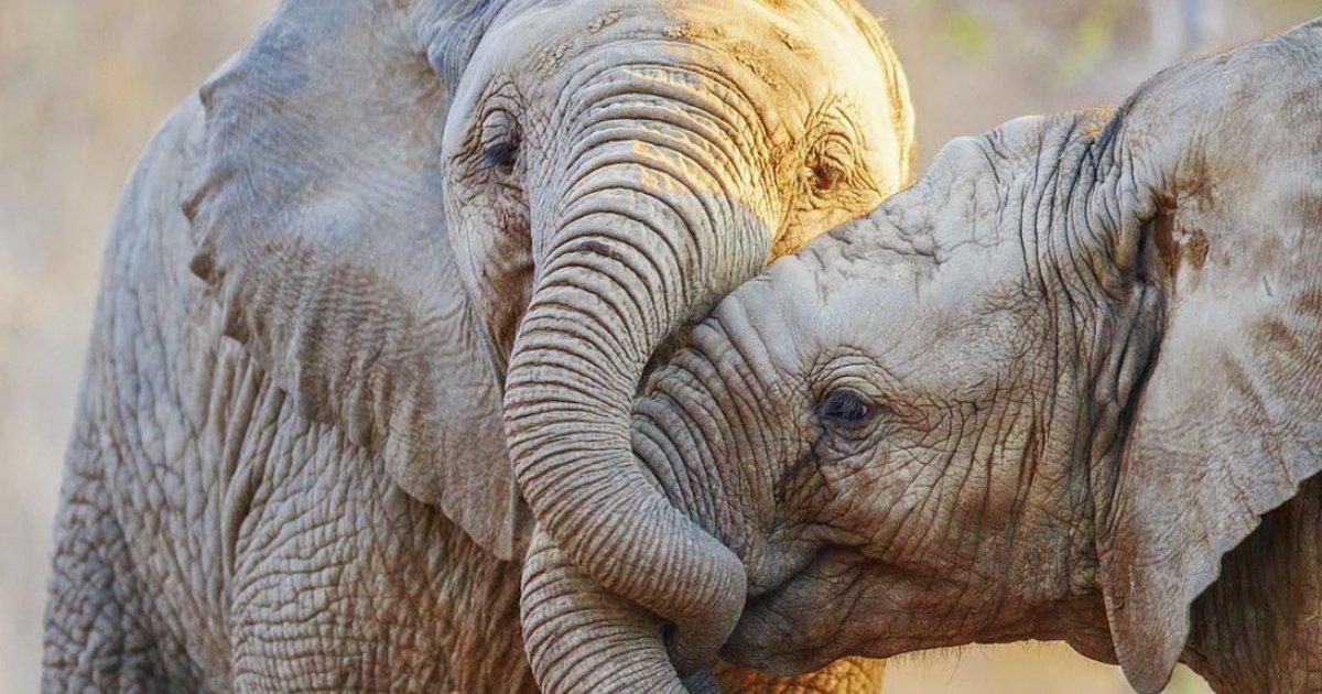 animales 2.jpg?resize=1200,630 - 23 Animales enamorados que derretirán hasta el corazón más frío