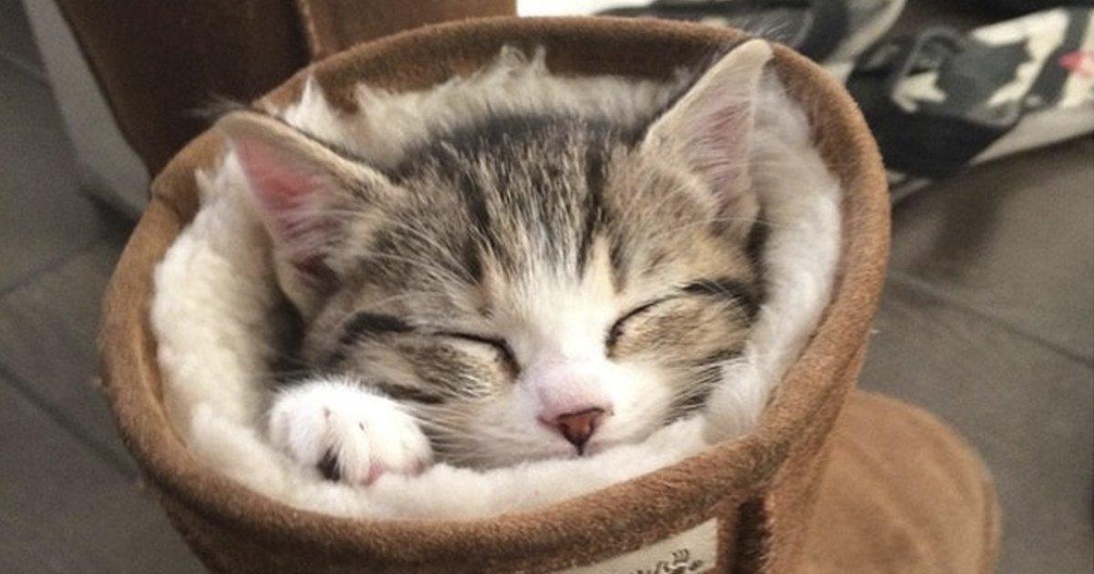 animalesdurmiendo.jpg?resize=1200,630 - 23 Fotos de animales durmiendo que te sacarán una sonrisa