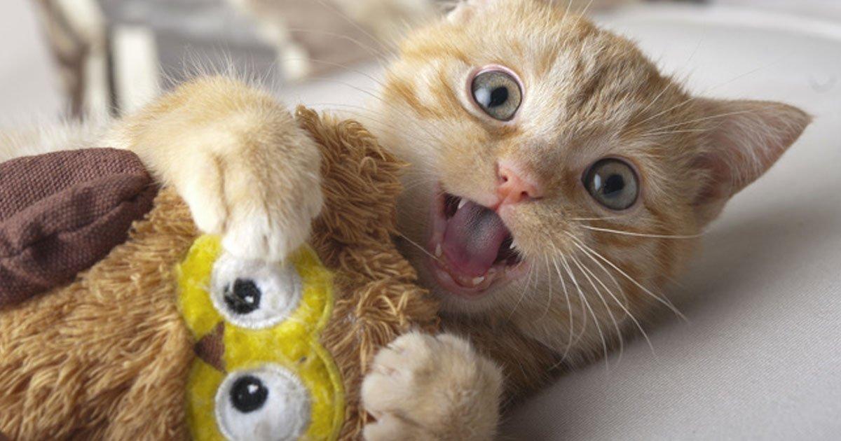 animalesregalos.jpg?resize=1200,630 - Usuarios comparten en la red fotos emocionales de sus mascotas que se volvieron locas con sus regalos