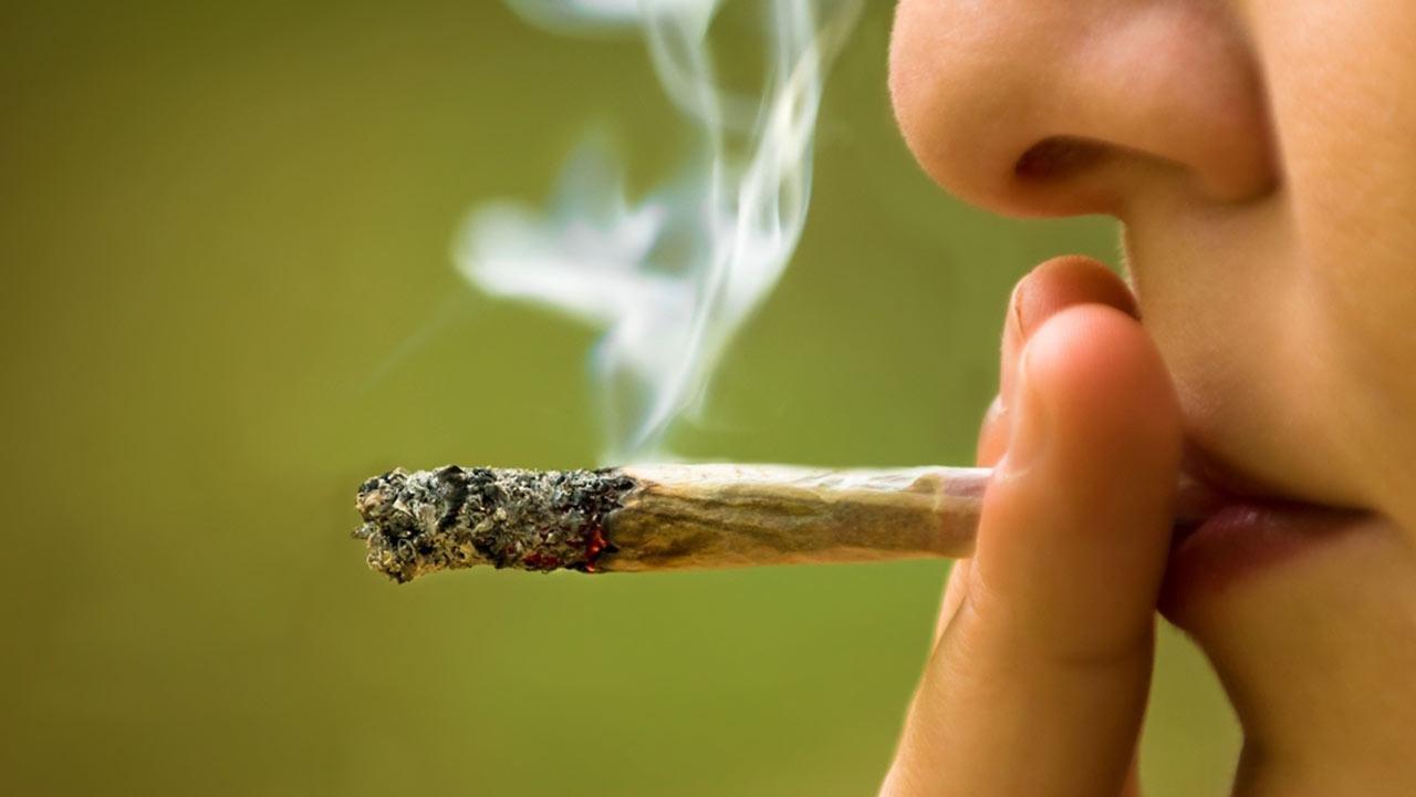 Resultado de imagem para Cannabis inflige danos a longo prazo em cérebros adolescentes: