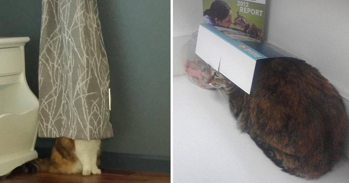 capa 2 1.png?resize=1200,630 - 16 gatos que acham que estão muito bem escondidos
