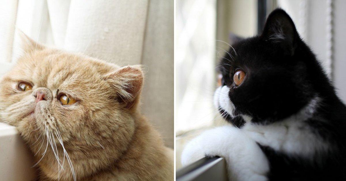 capa 2 3.png?resize=1200,630 - 20 gatinhos muito fofos que morrem de saudade dos donos