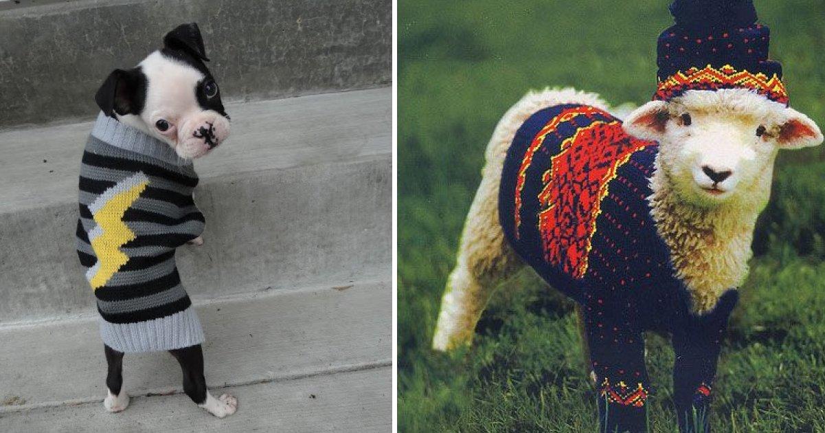 capa 2 6.png?resize=1200,630 - 20 animais que ficam ótimos com um casaquinho de lã