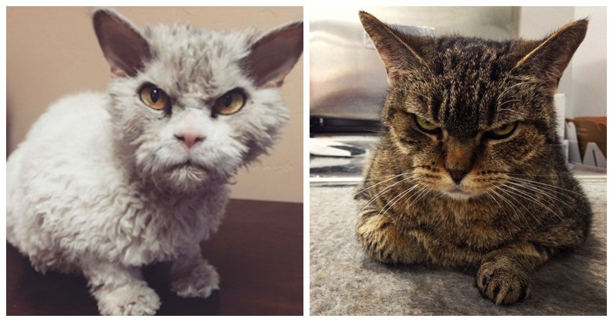 cat 4.jpg?resize=1200,630 - 16 Cats That Are Angry, Grumpy and Fed up with Just About Everything