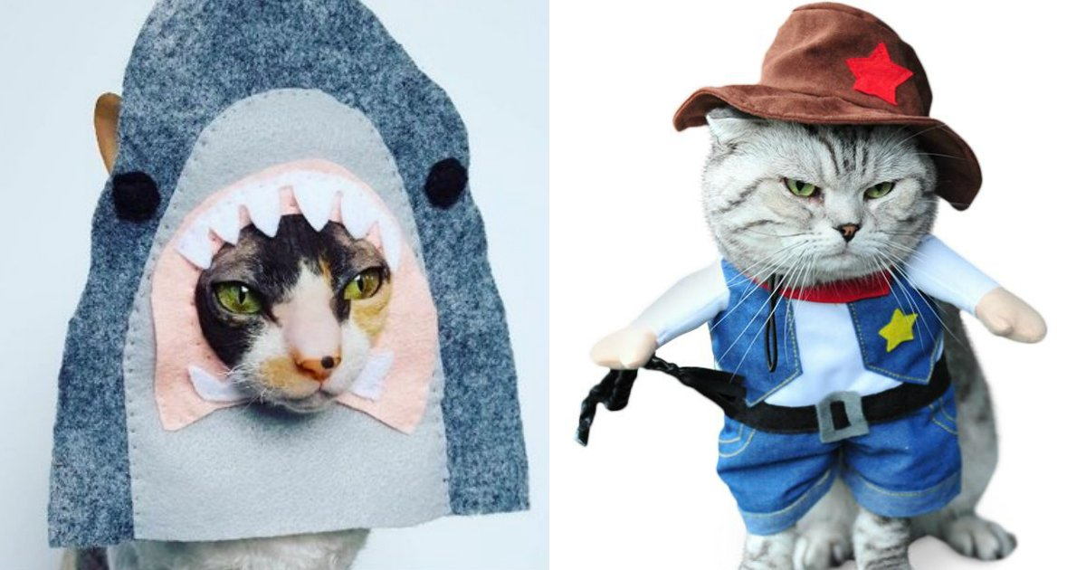 cat costumes 1.jpg?resize=636,358 - It's Now Time To Buy Your Own Adorable Halloween Cat Costumes