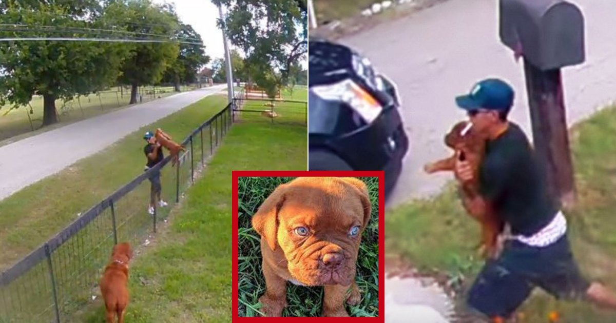chipper5.png?resize=300,169 - 10-Weeks-Old Puppy Returned To Owners After Footage Of Thievery Went Viral