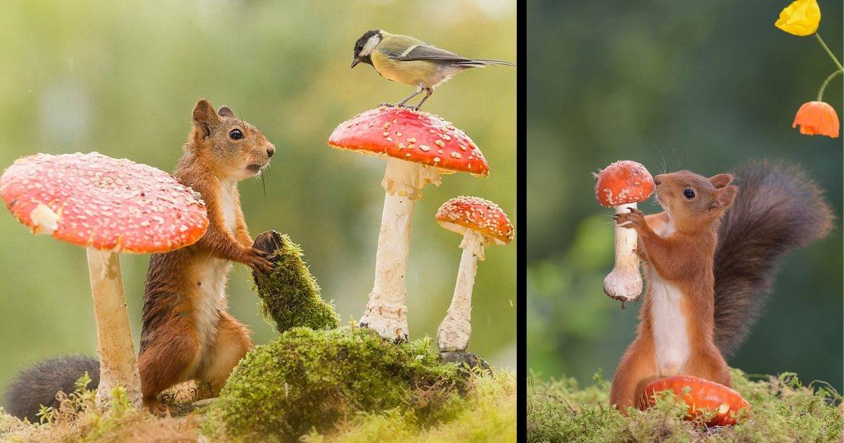 d2.png?resize=1200,630 - Images magiques d'écureuils roux photographiés en train de jouer autour des champignons