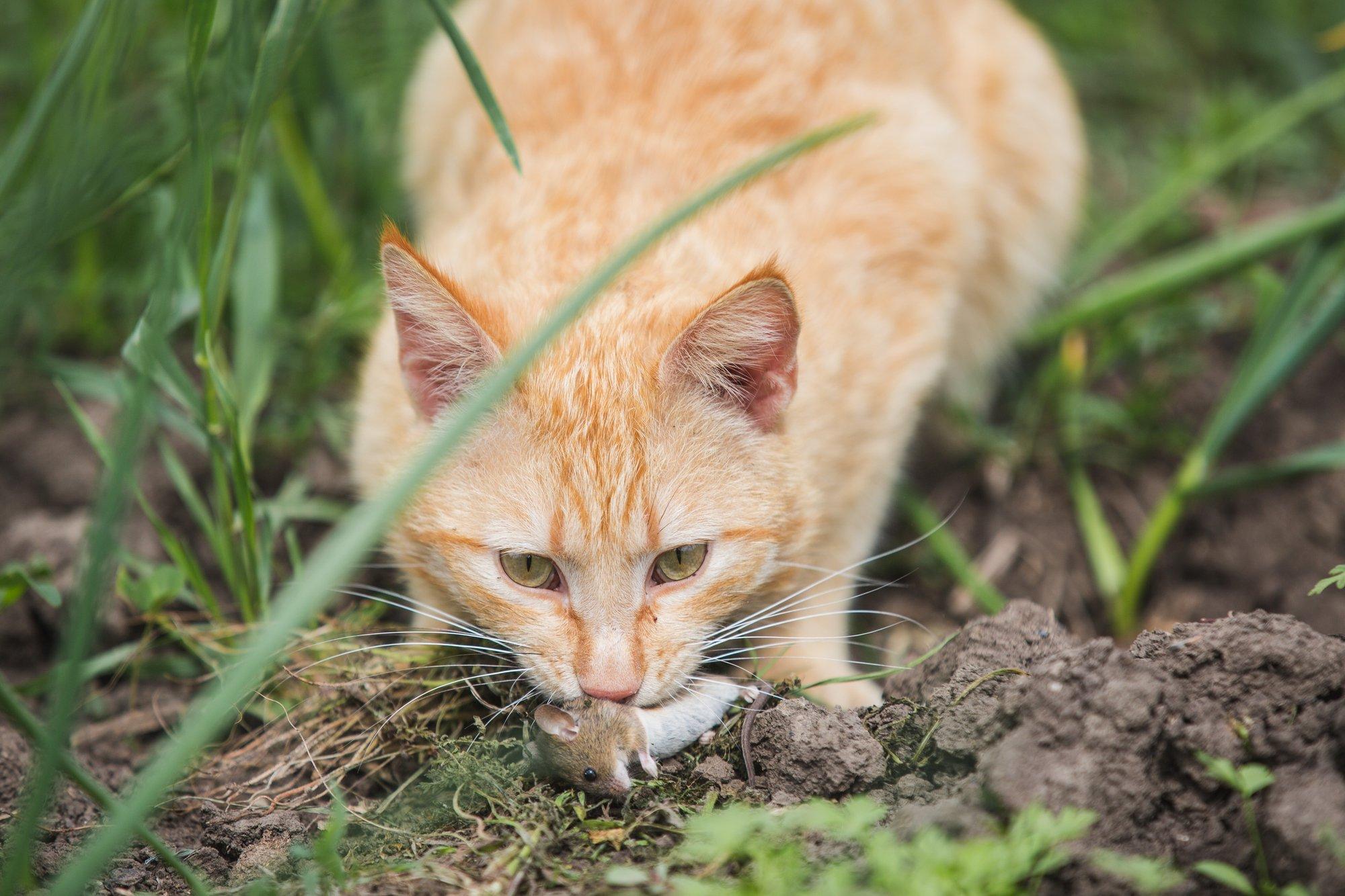 depositphotos 112160170 l 2015.jpg?resize=412,232 - Un maraîcher bio sauve ses cultures des rongeurs grâce à un refuge pour chats abandonnés.