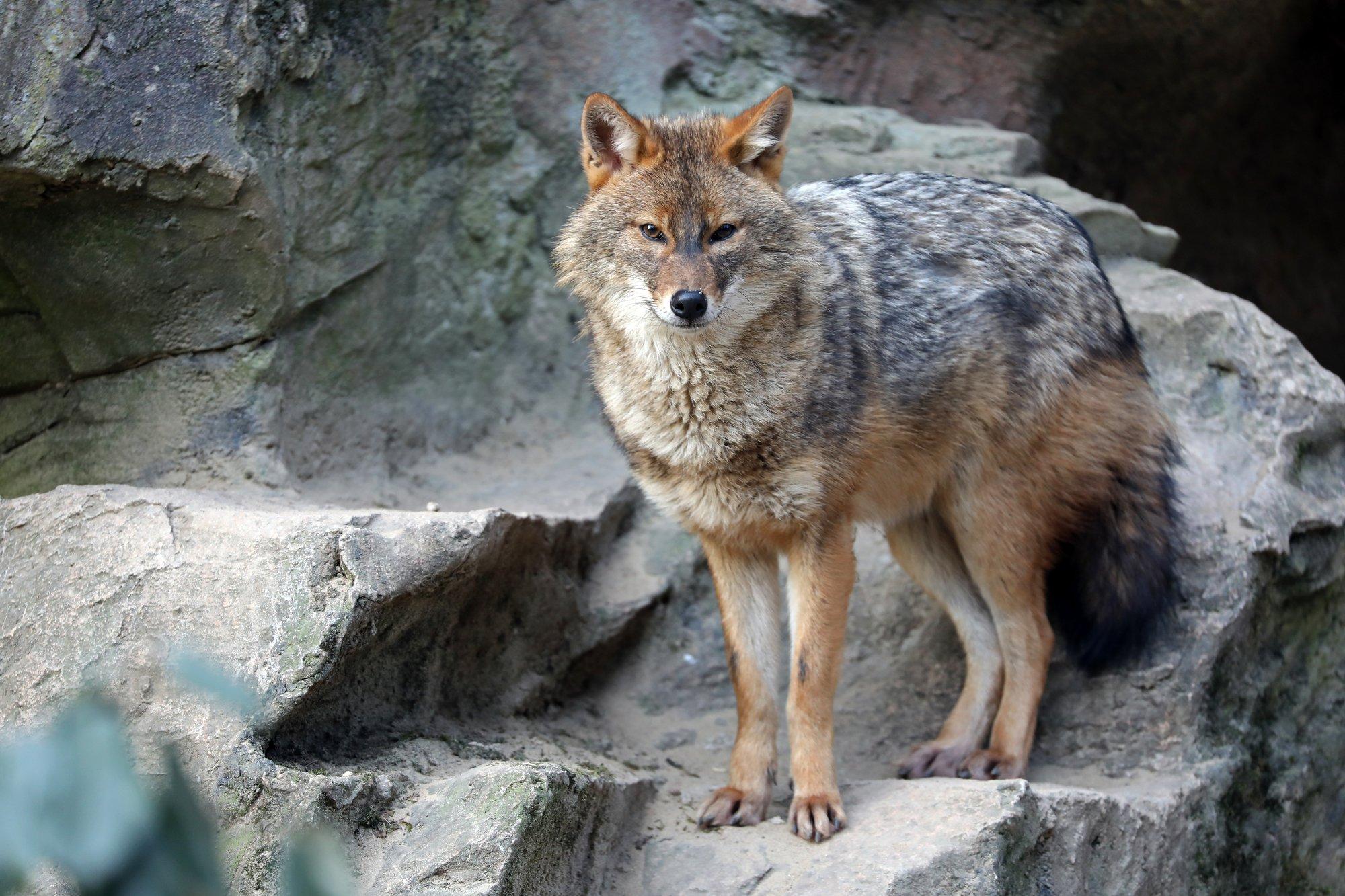 depositphotos 202753486 l 2015.jpg?resize=1200,630 - Le loup est finalement de retour en Bretagne!