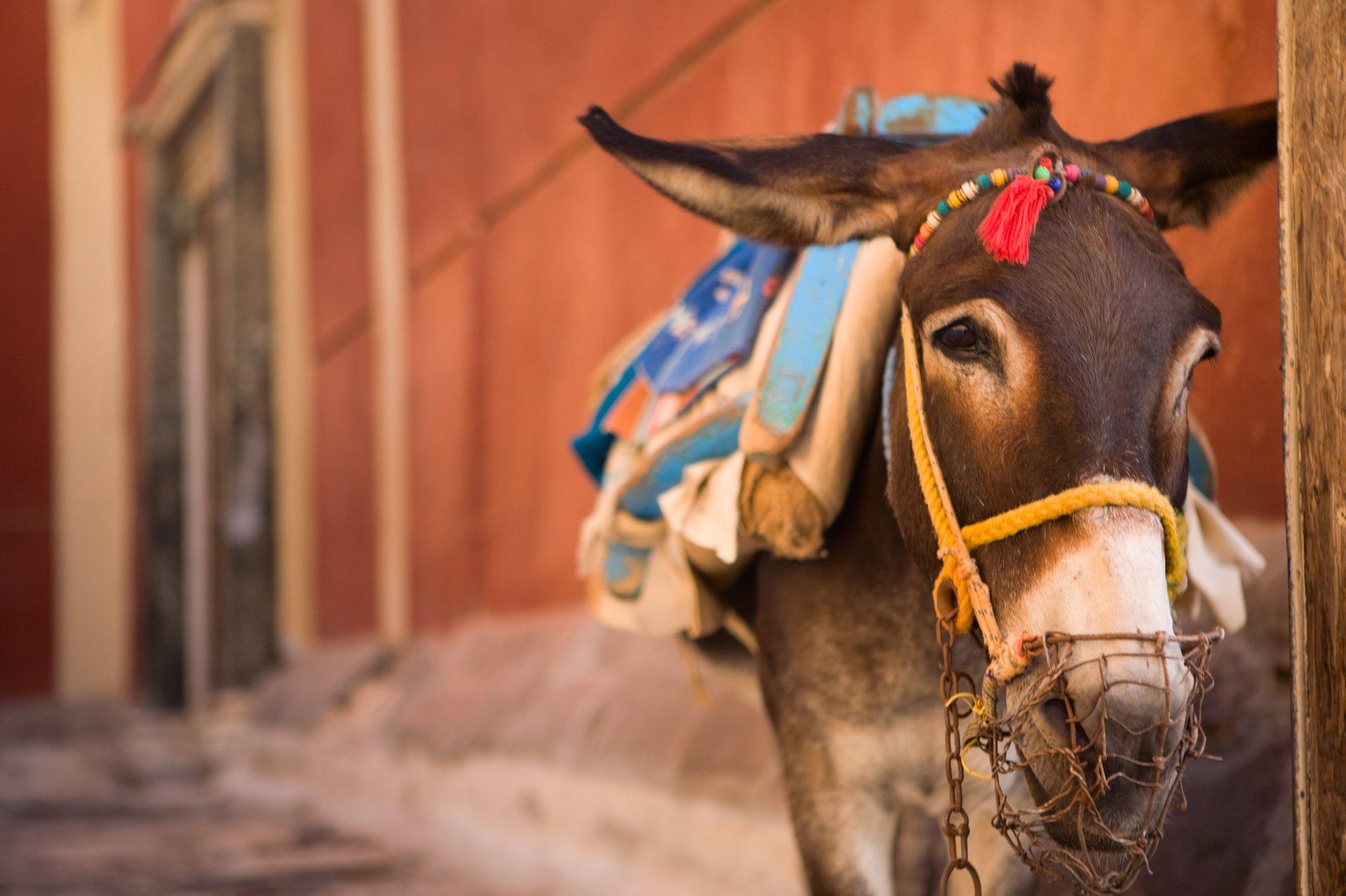 depositphotos 4689142 l 2015.jpg?resize=636,358 - Sur cette île grecque, les touristes en surpoids ne pourront désormais plus monter à dos d'âne.