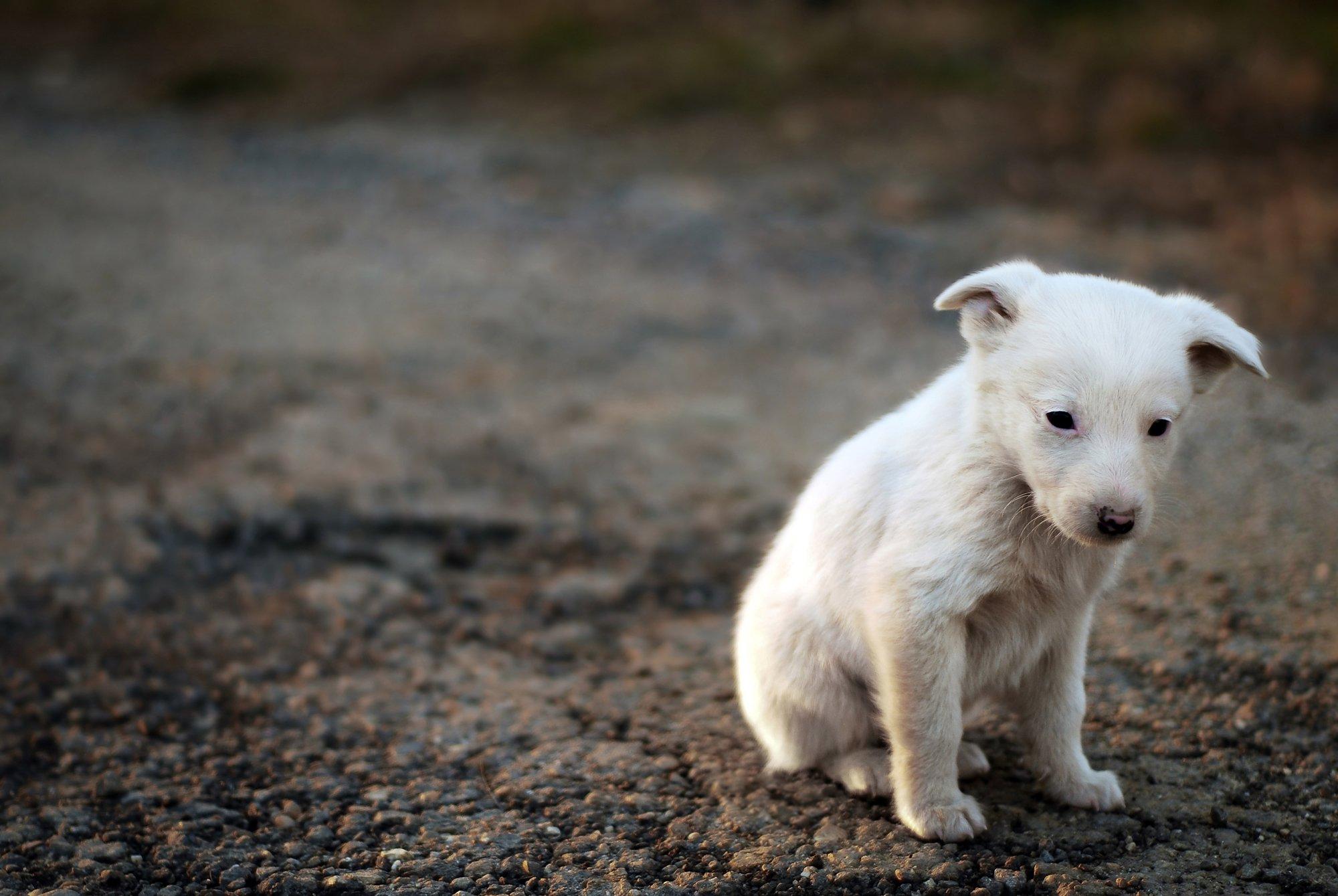 depositphotos 8141343 l 2015.jpg?resize=648,365 - Ce député veut punir plus gravement les abandons d'animaux et encourager leurs adoptions grâce à cette proposition de loi.