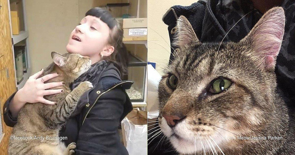 diff 7.jpg?resize=300,169 - Una mujer visitó un refugio y casi rompe en llanto al ver la tierna reacción de un gato