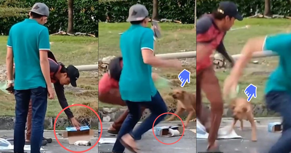 divya2 6.png?resize=412,232 - Mother Dog Chases Away the Men Who Tried to Capture her Baby Puppies