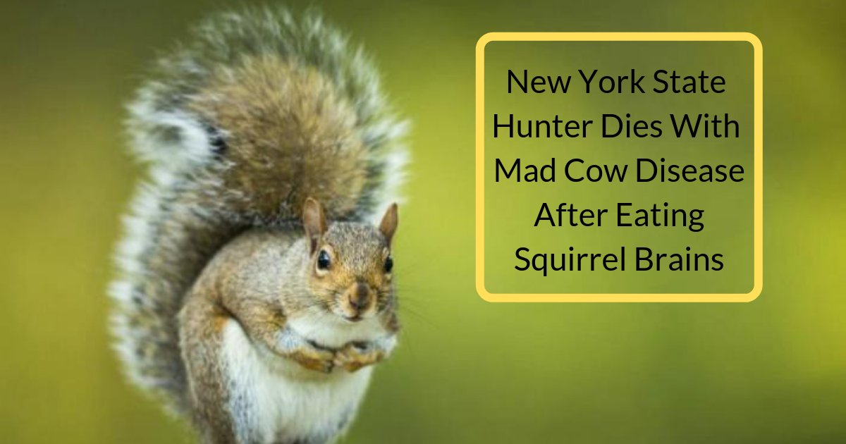 divya3 9.png?resize=412,232 - 61-year-old New York Based Hunter Died after Eating the Brain of a Squirrel