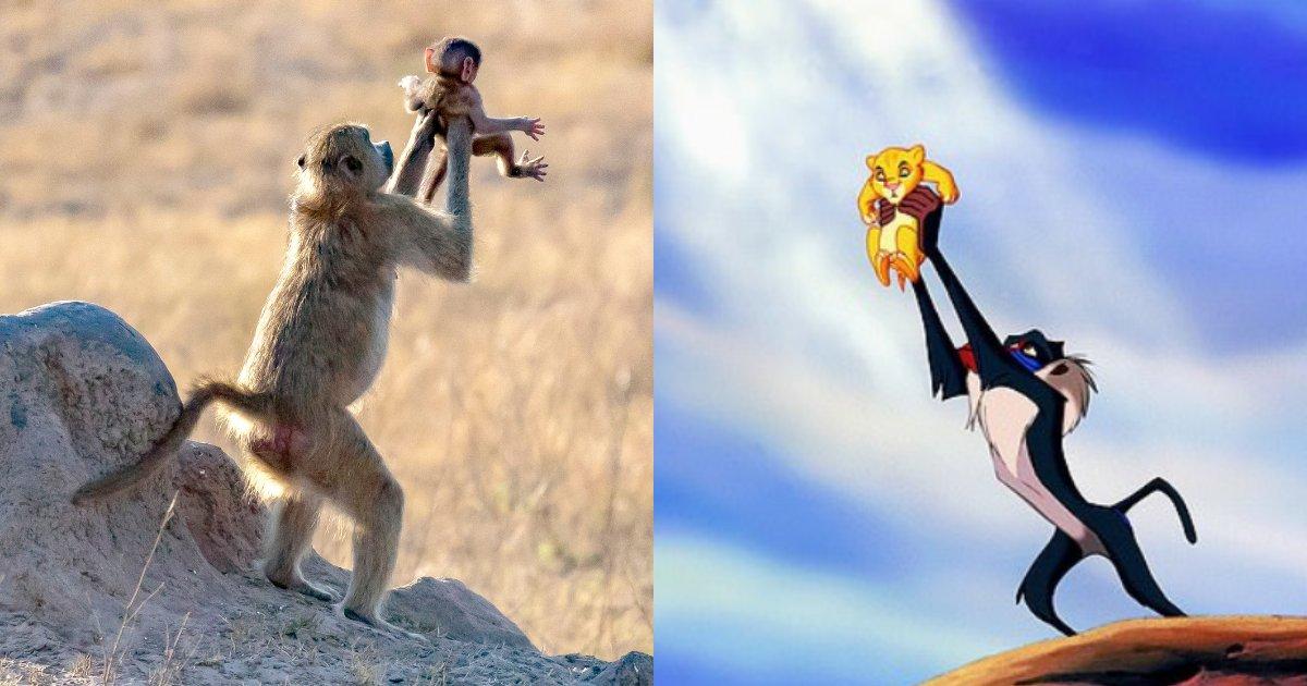 divya6 11.png?resize=1200,630 - Une femme prend en photo un singe recréant la scène du film Le Roi Lion à l'état sauvage