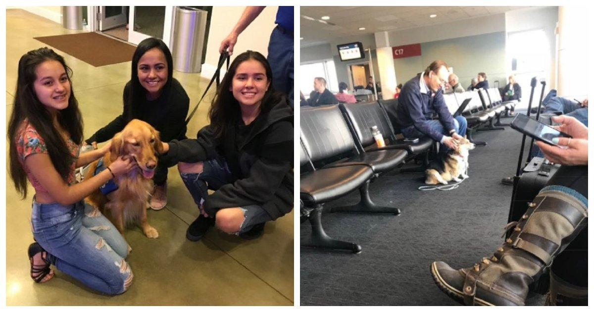 dog 3.jpg?resize=636,358 - Support Dog Senses His Owner's Panic Attack While At The Airport And Immediately Comforts Her