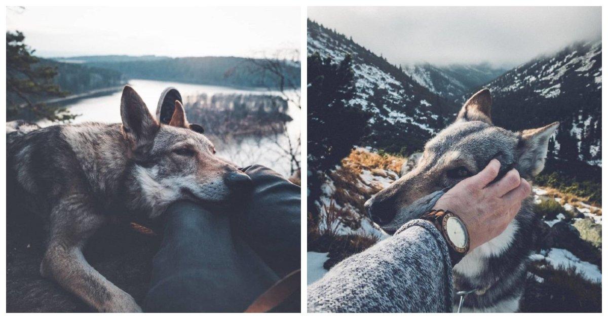 dog 6.jpg?resize=1200,630 - Ce photographe a pris des photos de son chien en voyageant et elles sont merveilleuses