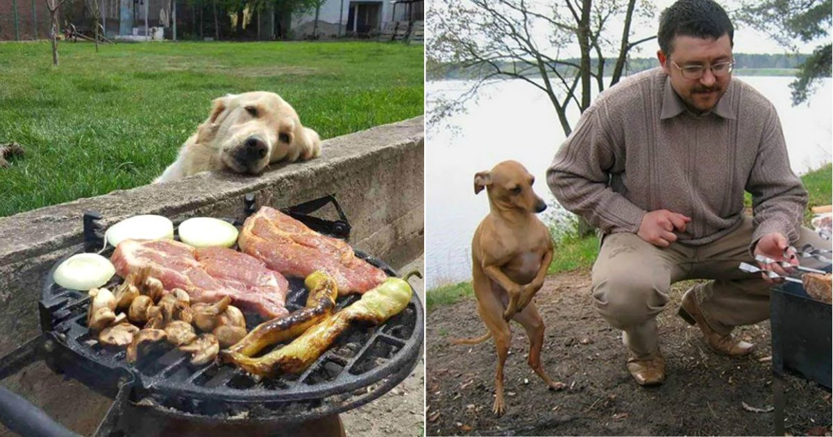 dog beg.jpg?resize=412,232 - 15+ Hilarious Photos Of Dogs Begging For Food That Will Make You Give Everything You Have