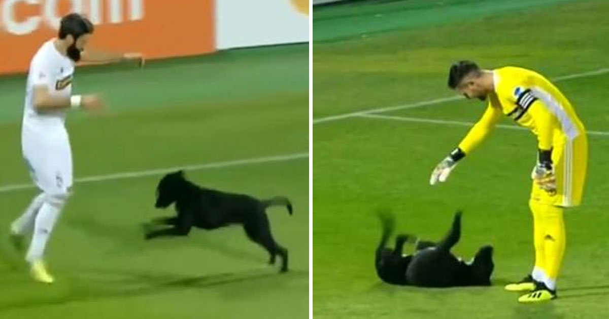 dog pitch invasion.jpg?resize=412,232 - Dog Invades The Pitch And Demands A Belly Rub At A Football Match In Georgia