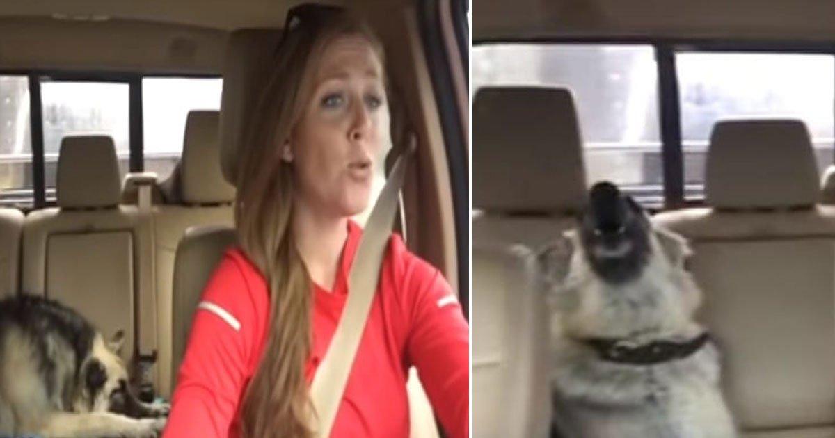 dog sing.jpg?resize=1200,630 - Ce chien se réveille d'une sieste pour chanter sur sa chanson préférée lors d'un voyage en voiture