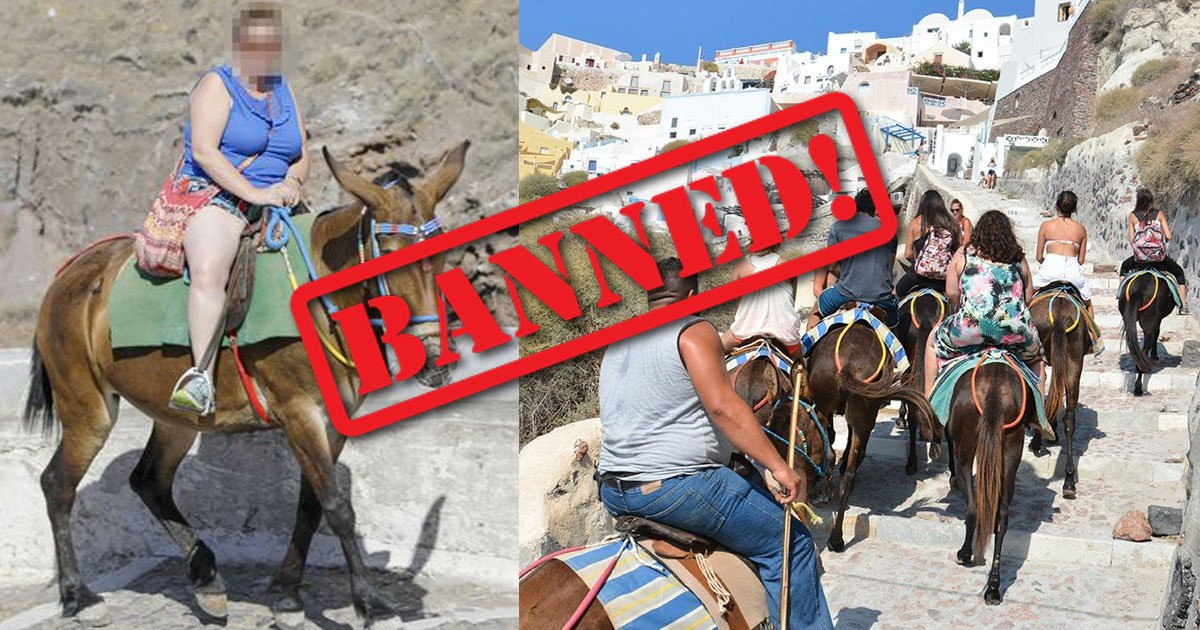 donkey ride ban.jpg?resize=412,232 - Greece Banned Overweight Passengers From Riding The Donkeys After Releasing A Set Of Images Illustrating Injuries