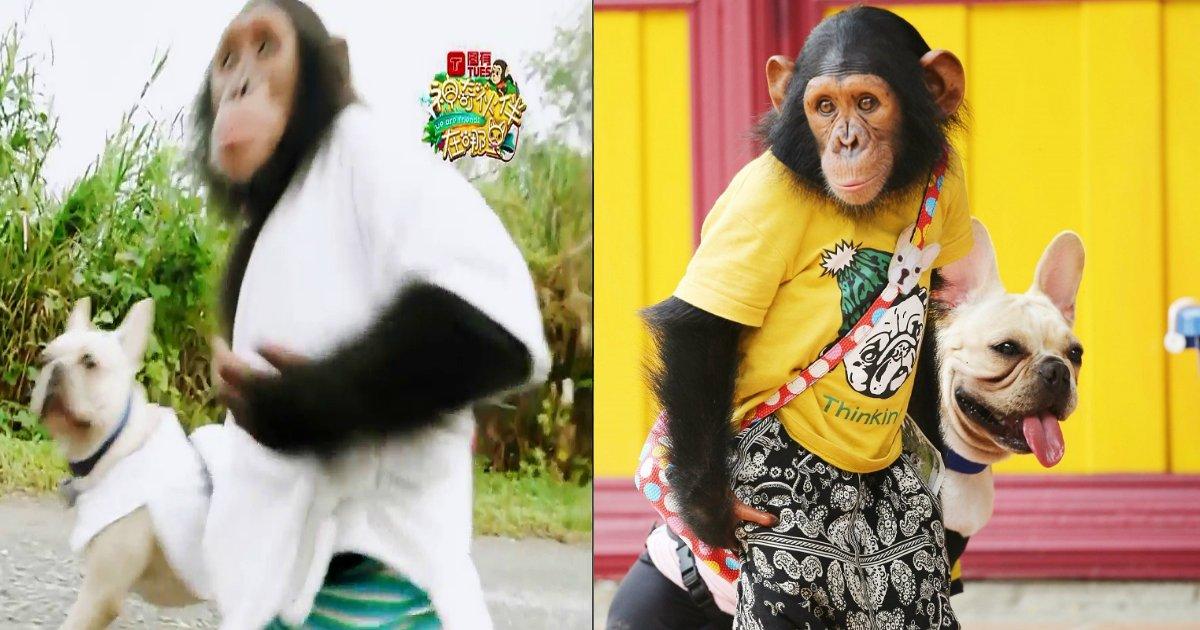 e69ab4e58a9b.jpg?resize=1200,630 - 仲の良さで人気のチンパンジーと子犬。 その裏には...