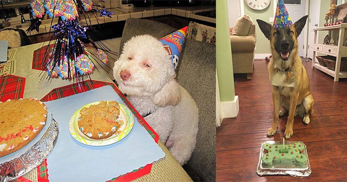 ec839decb695.jpg?resize=1200,630 - '세젤귀' 동물들의 귀여운 '생일파티' 사진 모음. jpg