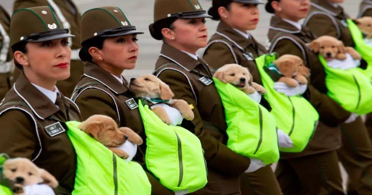 featured image 22.jpg?resize=412,232 - Des chiots adorables de la police lors du défilé militaire annuel du Chili
