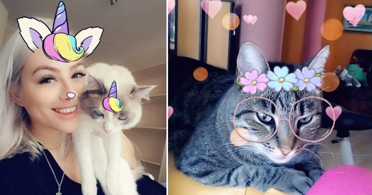 featured image 45.jpg?resize=412,232 - Snapchat Has Finally Launched Selfie Filters For Cats
