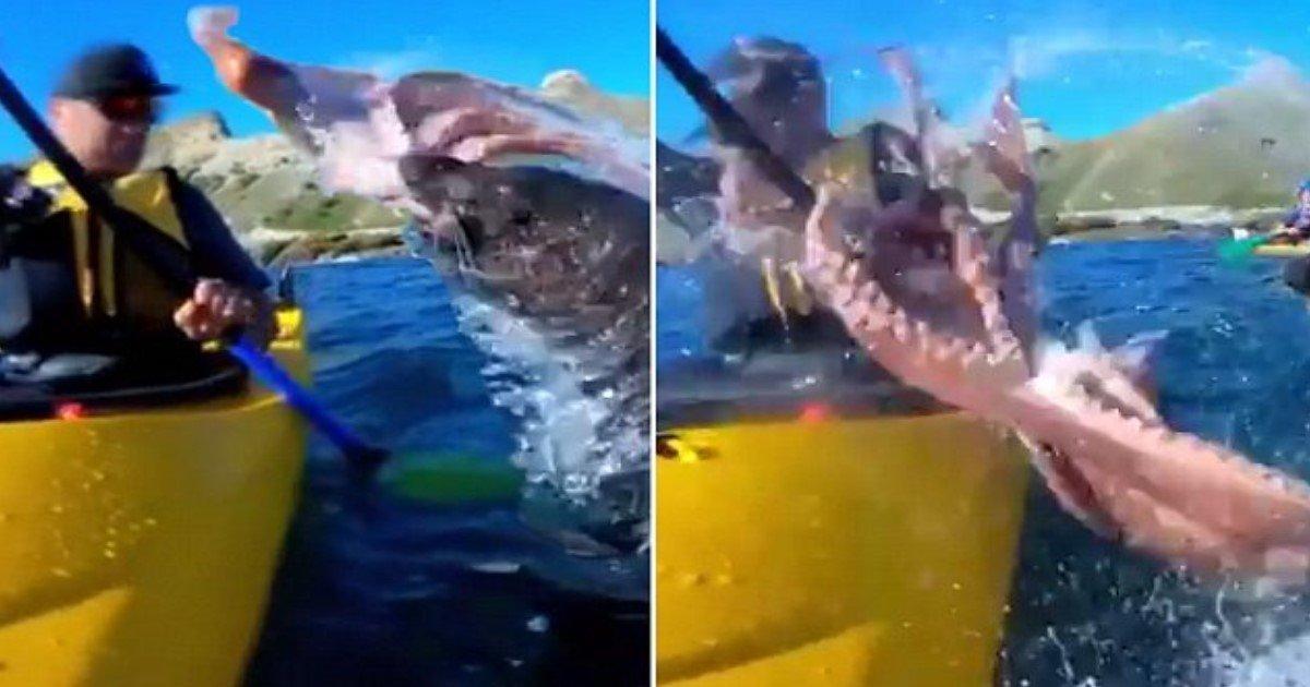 featured image.jpg?resize=1200,630 - Moment incroyable: un phoque malicieux gifle un kayakiste au visage avec une pieuvre géante