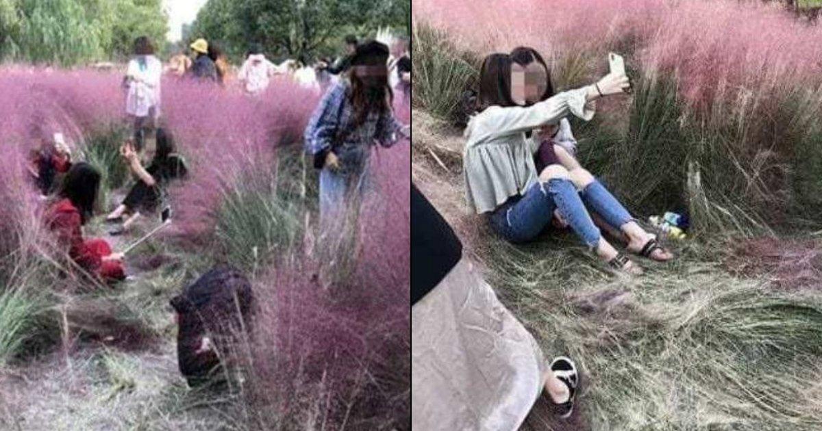 field3.jpg?resize=1200,630 - La folie des selfies des touristes a complètement détruit un champ d'herbe rose juste pour obtenir des photos parfaites