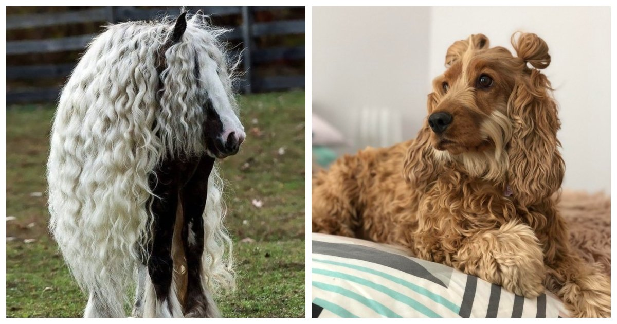 fur1.jpg?resize=1200,630 - These 16 Animals With Gorgeous Hair Will Make You Ask 'What's Your Secret?'