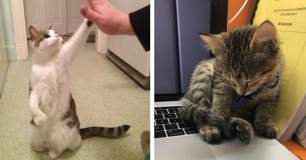 gatos 1.jpg?resize=412,275 - 25 Imagens que mostram que os gatos são criaturas muito fofas