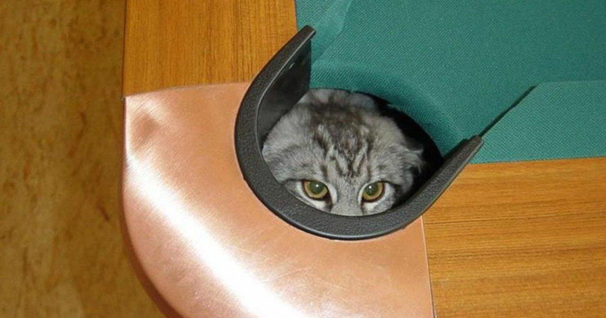 gatos 3.jpg?resize=1200,630 - 15 Gatos que piensan que están muy bien escondidos