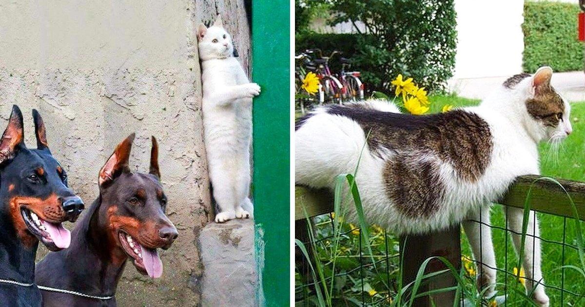 gatos sao criaturas divertidissimas capa.jpg?resize=732,290 - 31 Fotos que mostram que gatos são criaturas divertidíssimas