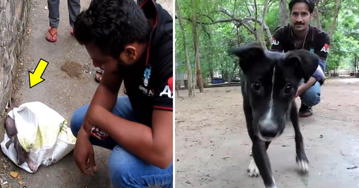 ggsa.jpg?resize=412,232 - Transformação incrível um cão de rua encontrado dentro de um saco por voluntários de resgate aos animais