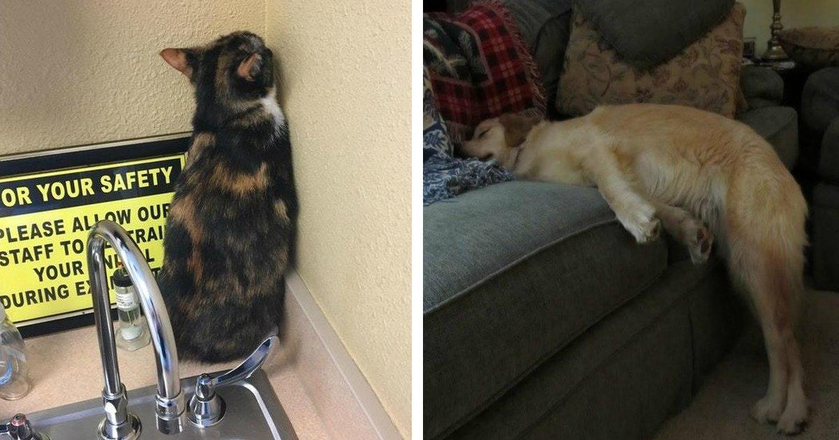 habito.jpg?resize=1200,630 - 23 Fotos que retratam os mais engraçados hábitos de cães e gatos