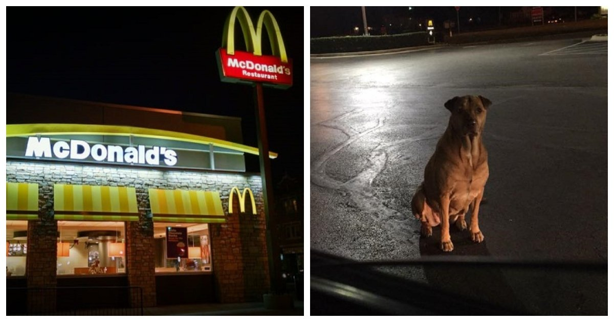 """mcdonalds.jpg?resize=412,232 - This """"Gold Diggin"""" Dog Scammed Burgers Off McDonald's Customers By Pretending To Be A Stray"""