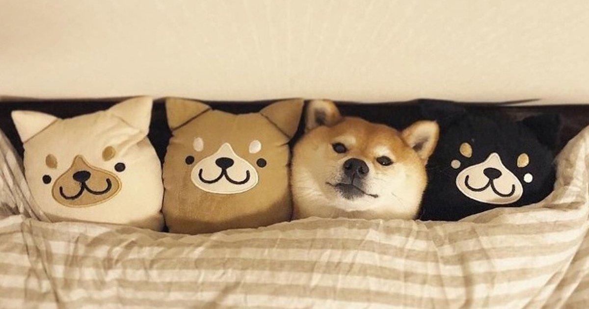perros 1.jpg?resize=1200,630 - Todo el mundo sabe que los perros son los mejores amigos del hombre, y nosotros logramos comprobarlo