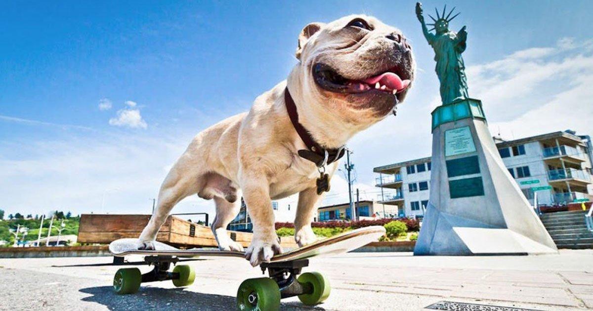 perros 3.jpg?resize=636,358 - 13 Perros que encontraron su vocación profesional