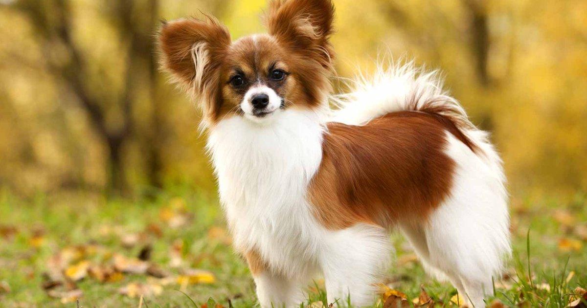 perros.jpg?resize=1200,630 - Según un estudio, estas son las razas de perros más inteligentes