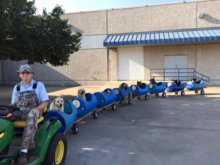 petit train.jpg?resize=636,358 - Ce retraité de 80 ans a construit un petit train pour chiens abandonnés