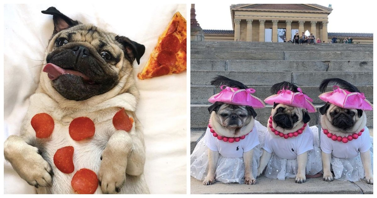 pugs.jpg?resize=1200,630 - 14 Times Pugs Literally Caused The Internet To Implode From Sheer Adorableness