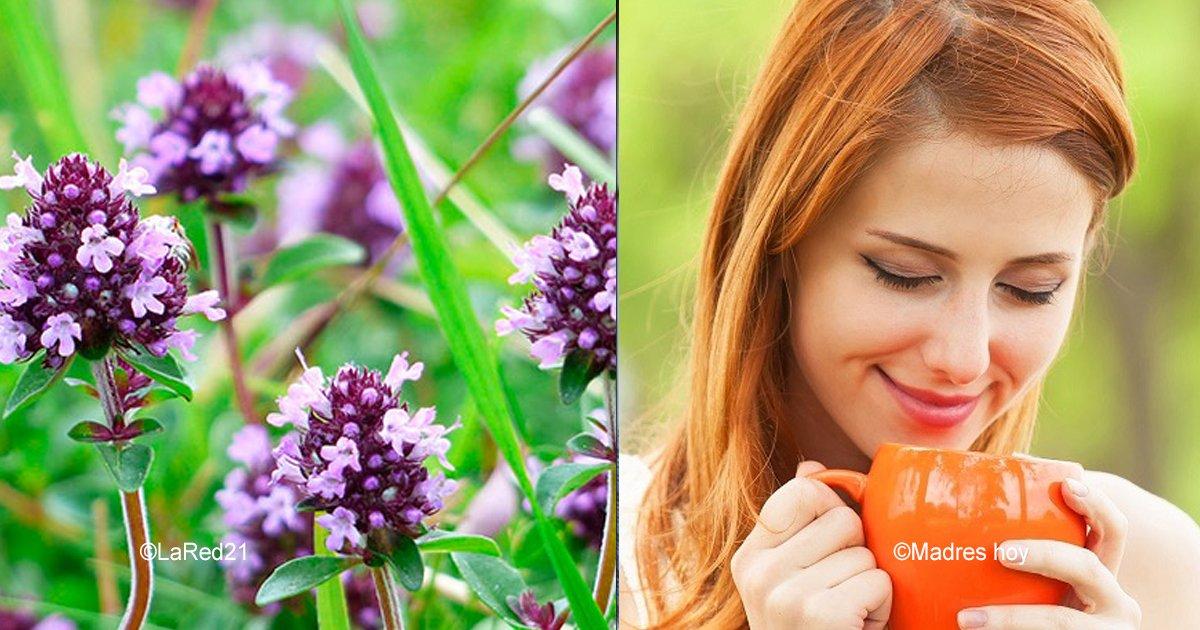 sin titulo 1 5.jpg?resize=648,365 - Con este remedio dile adiós al lupus, fatiga crónica, fibromialgia, vértigo, problemas de tiroides y otros males
